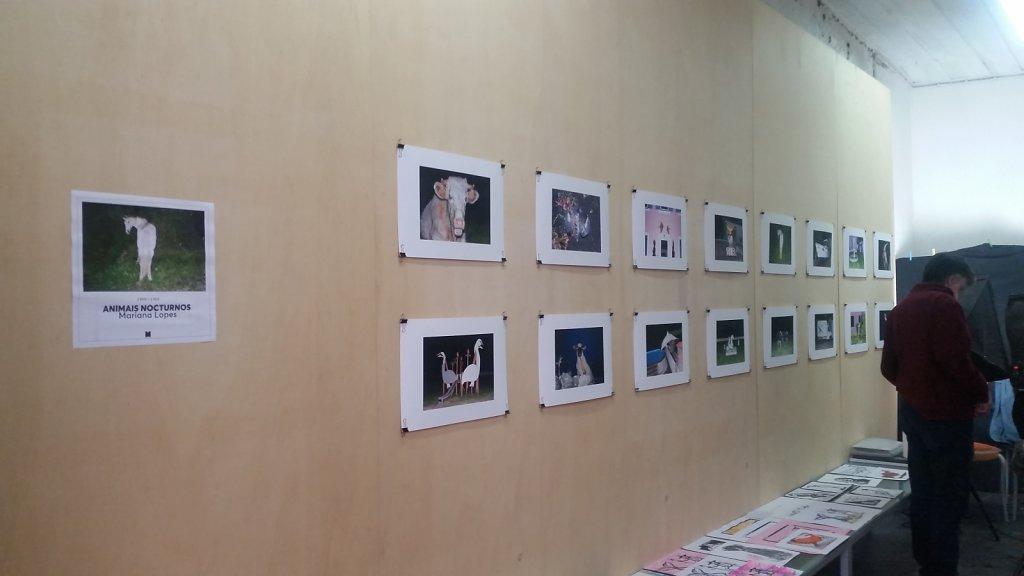 """""""Nocturnal Animals"""" - Miolo Gallery, S.Miguel, Azores Nov./Dez. 2017"""